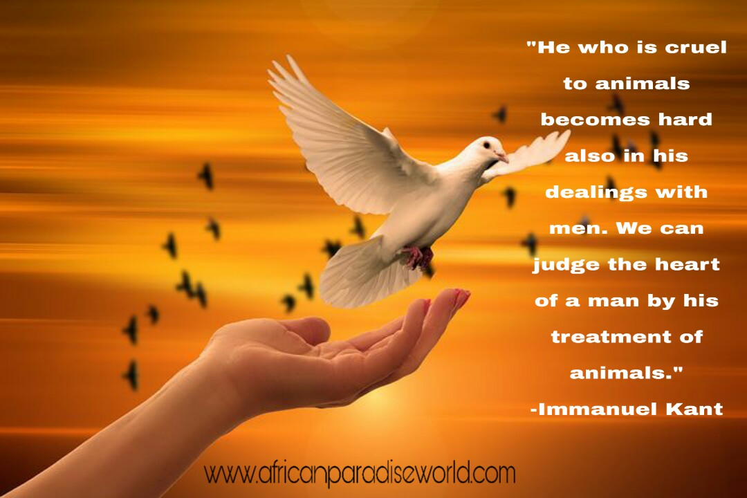 A beautiful quote that promotes kindness— even unto animals