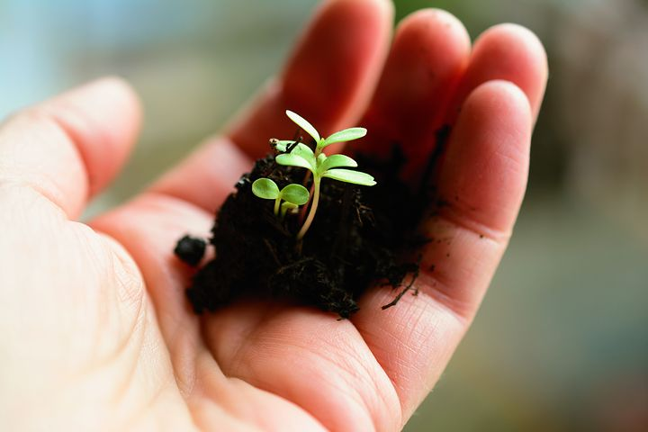 You are the farmer of your life. You decide the kind of crops or seeds to sow.